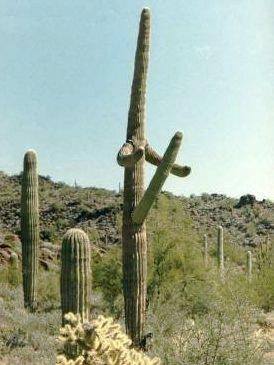 cactus-envy.jpg